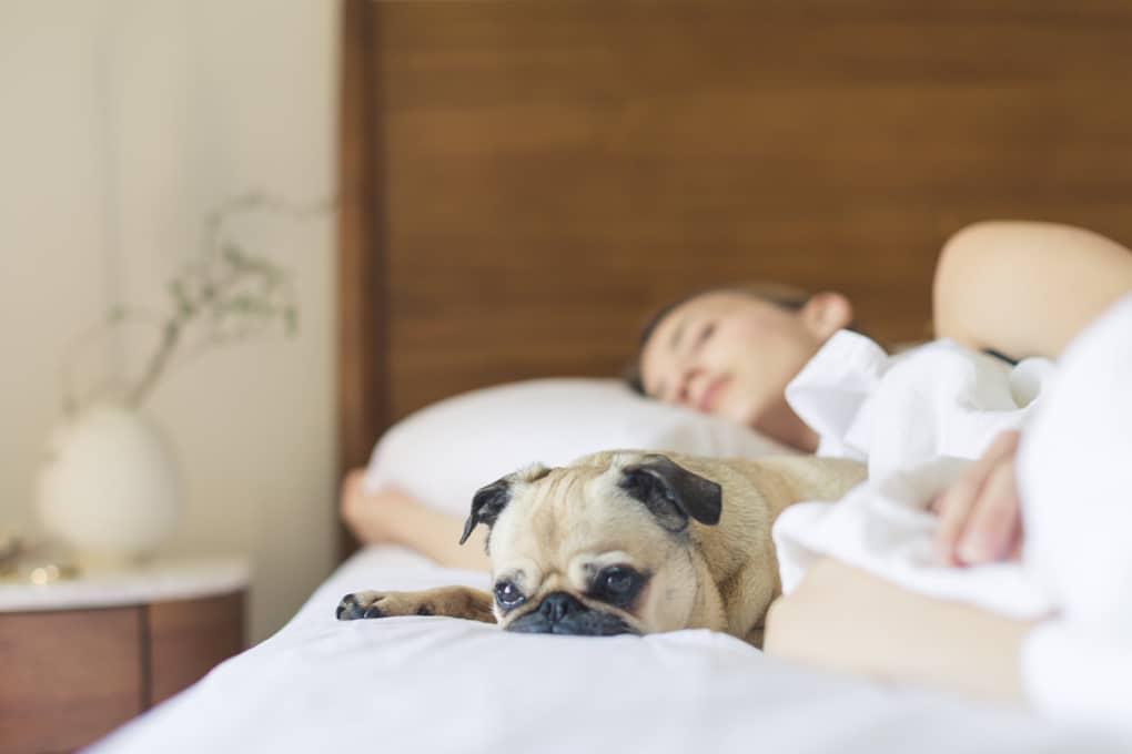 6 Tips for Better Sleep