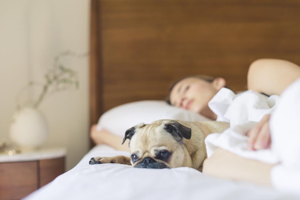 1020 - bed-bedroom-cute-545016